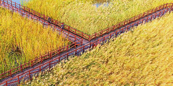 天津西青郊野公园 苇塘湿地色彩斑斓