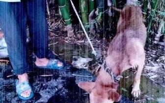 一个月百余村民家的狗被盗 渠县警方擒获偷狗团伙