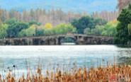 西湖冬色美如画