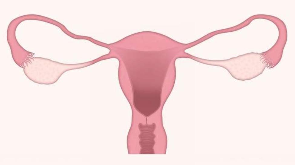 """医学界终于意识到子宫不仅仅是一个""""婴儿房""""了!"""