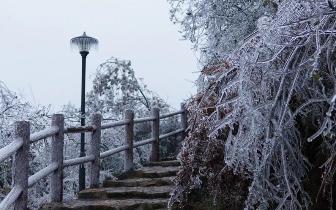 乌石峰现雾凇冰挂景观 赏冬日美景无需去远方