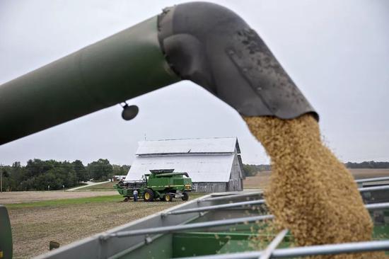 ▲目前人们乐观地认为,中国将很快恢复购买美国大豆。(视觉中国)