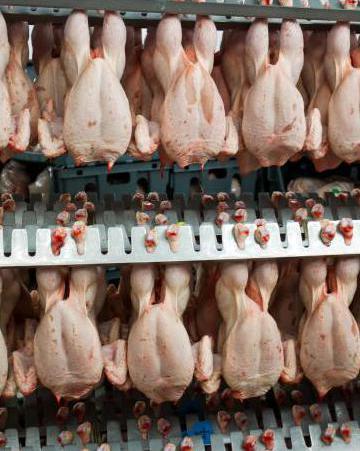 为了吃肉人类同时养了超210亿只鸡