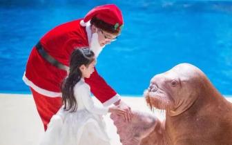 欧乐堡海洋世界放大招?圣诞狂欢游戏畅玩!