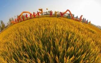 大同市新型职业农民培育稳步推进