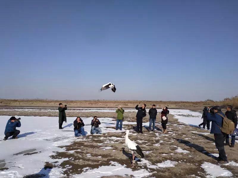 唐山开展救助鸟类放飞活动 此次共放飞6只鸟类