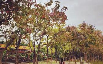 中山公园|中山公园的这个地方完成大变脸,你发现了吗?