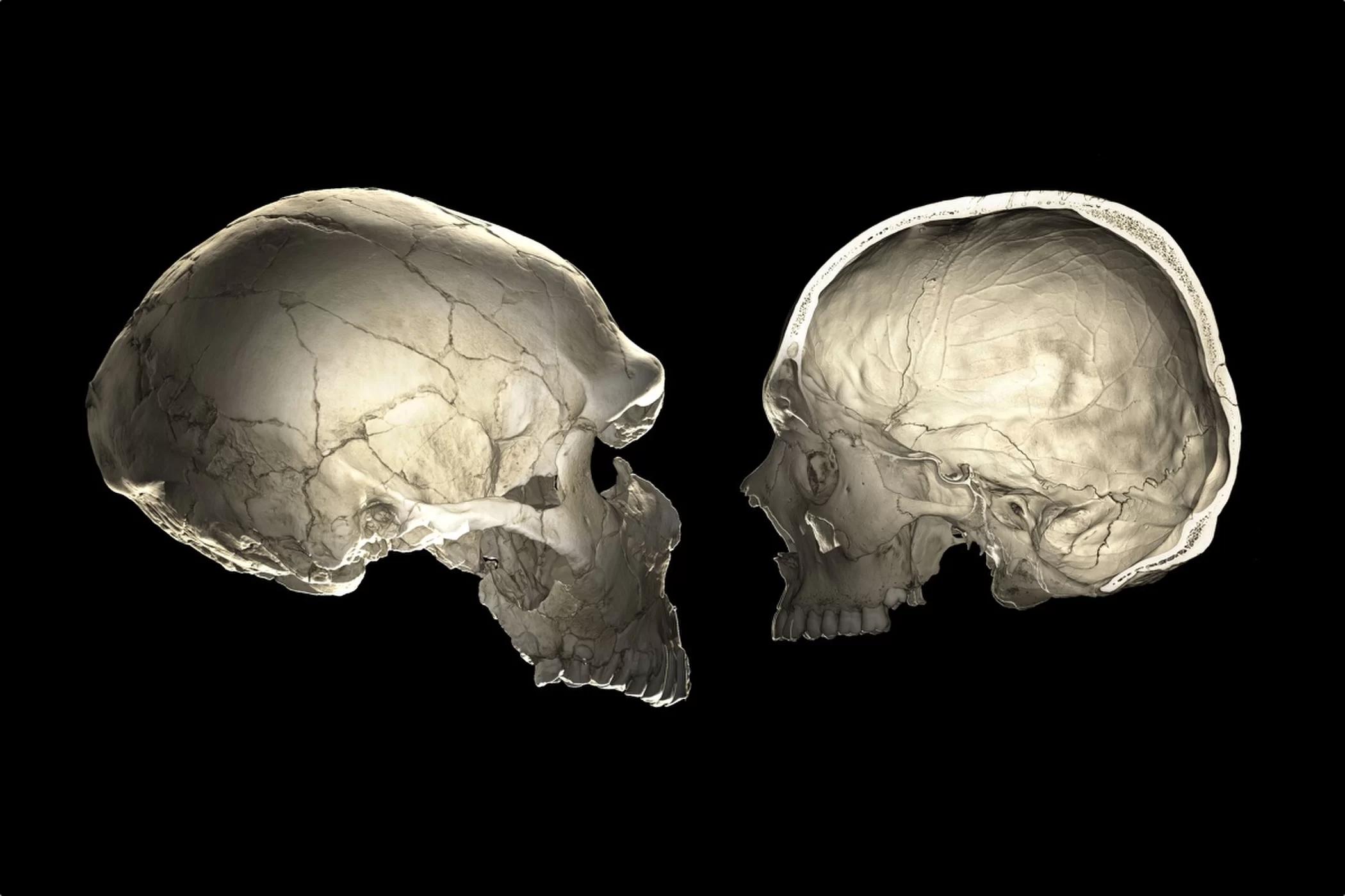 如果你的脸比普通人长, 你可能携带尼特人 DNA