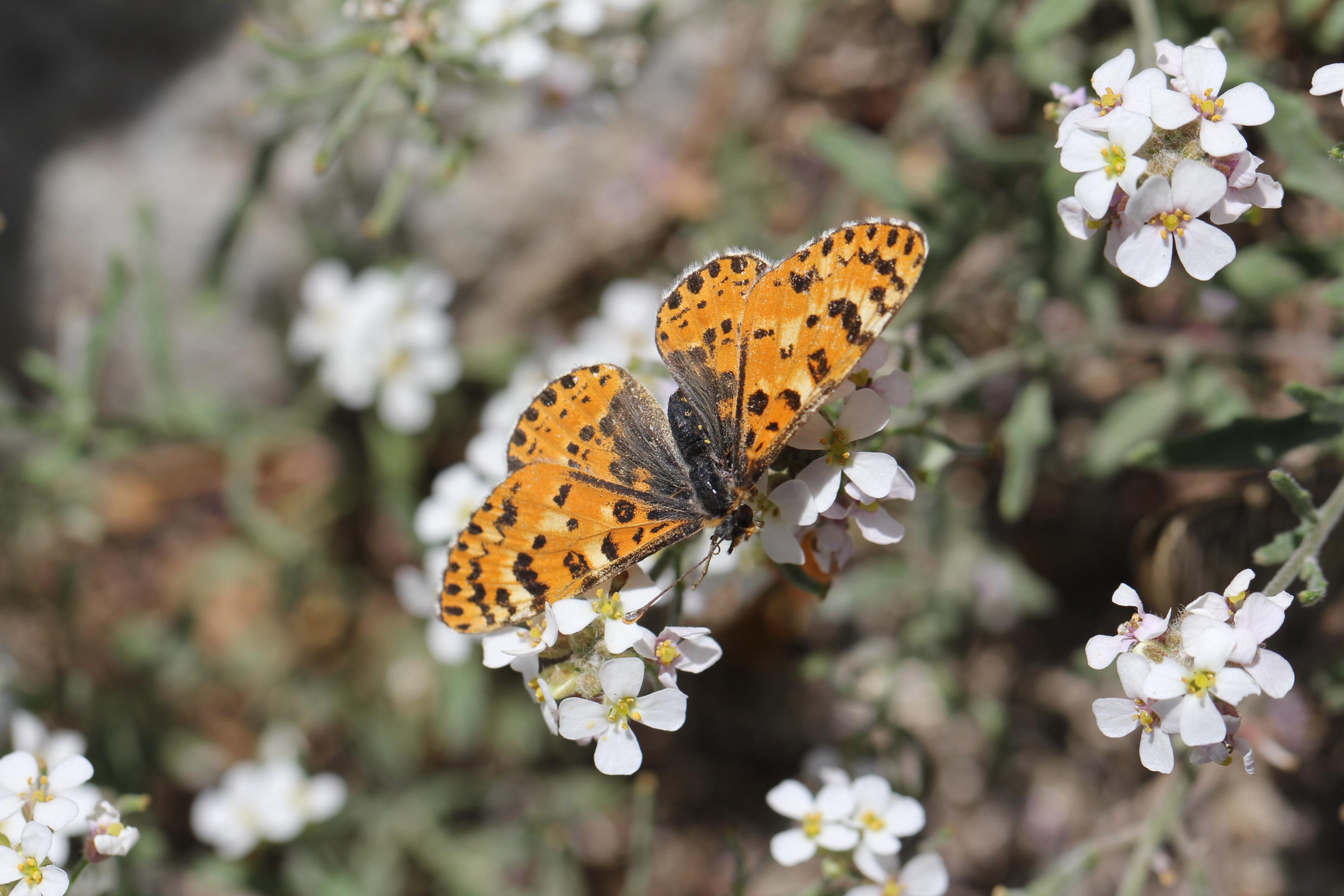 宁夏科普作品创作与传播大赛二等奖《环境监测小精灵——蝴蝶》