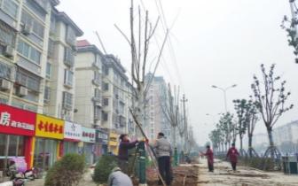 园林|信阳园林部门高压线下栽种高树 网友吐槽:没常识