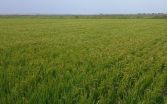 土地管理法修正草案:非农建设用地将不再必须国有