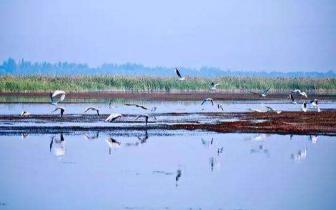 江西省实施河长制湖长制条例明年1月1日起施行