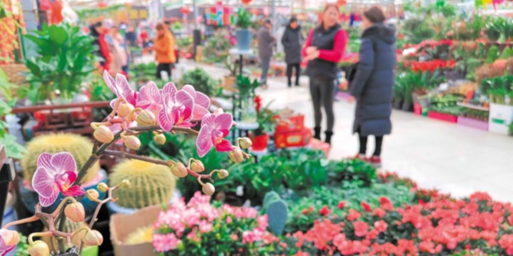 银川花卉市场购销两旺
