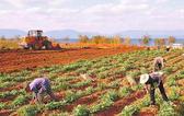 湖南首次线上线下同步拍卖农村土地经营权