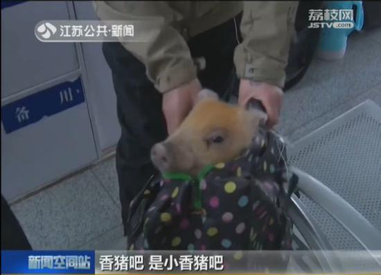 女子带宠物猪坐火车被拦:它是我孩子 为啥不让带