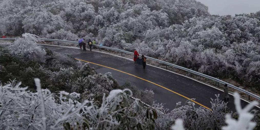 广西多地气温突降零下 抗霜冻进行时