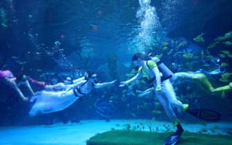 元旦也浪漫  这对新人用海洋婚礼镌刻一辈子的幸福