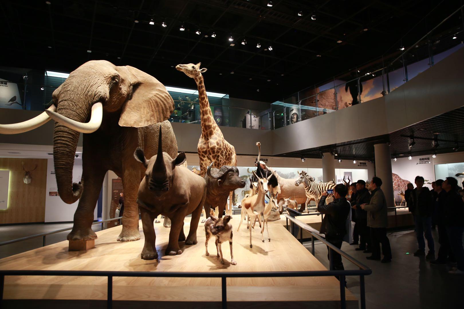 浙江自然博物院安吉馆区试开馆了