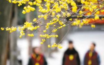 4日起福州气温回升 5日市区最高温可达22℃
