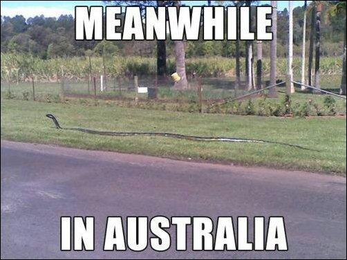 马桶内现巨蟒吓坏留学生 澳媒体:这就是澳大利亚