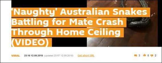 """""""淘气的澳大利亚蛇在跟同伴打架的时候把天花板搞穿了"""""""