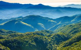 66.80%:福建森林覆盖率连续40年居全国首位