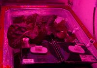 在太空中种植蔬菜不是梦 空间站宇航员们正在尝