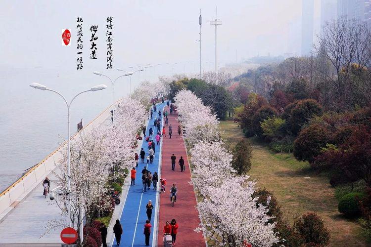 2018杭州首届樱花徒步节 一起去走杭州最美的一条路
