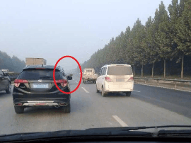 """郑州早高峰现""""疯狂""""的鸵鸟 一路和轿车赛跑"""