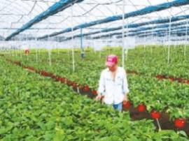 厉害了!两基地年产销绿萝1800万盆产值近2亿