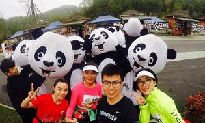 萌宠当道! 300只领跑熊猫闪耀大美成马