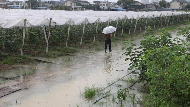 长沙一蔬菜示范基地被淹数百亩 农户很心塞