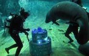 饲养员潜水为海牛送蛋糕
