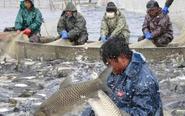 渔民在零下10度中捕鱼