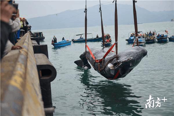 那条搁浅的抹香鲸,它的主题展馆选址东江产业园