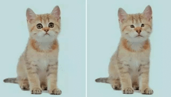 养生小知识:每天吸猫一大口,轻松活到九十九