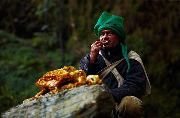 那些喜马拉雅山上的神秘采蜜人