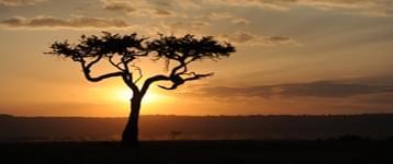 摄影师镜头下的狂野非洲