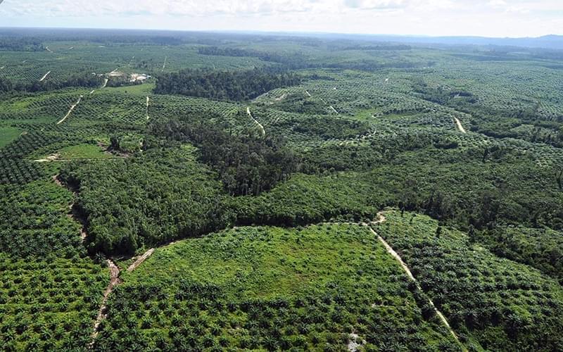 那一刻,我发现了苏门答腊的新主角:油棕榈。