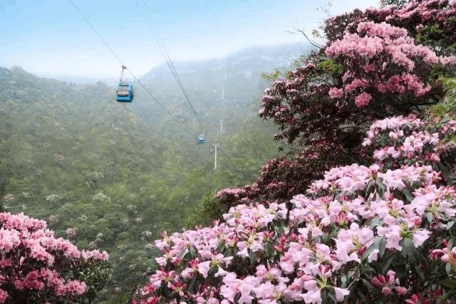 重庆这两个区县被国家点名 森林旅游成特色