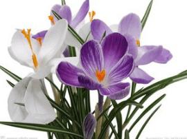 3月16日到南靖去看兰花菖蒲展 展期4天
