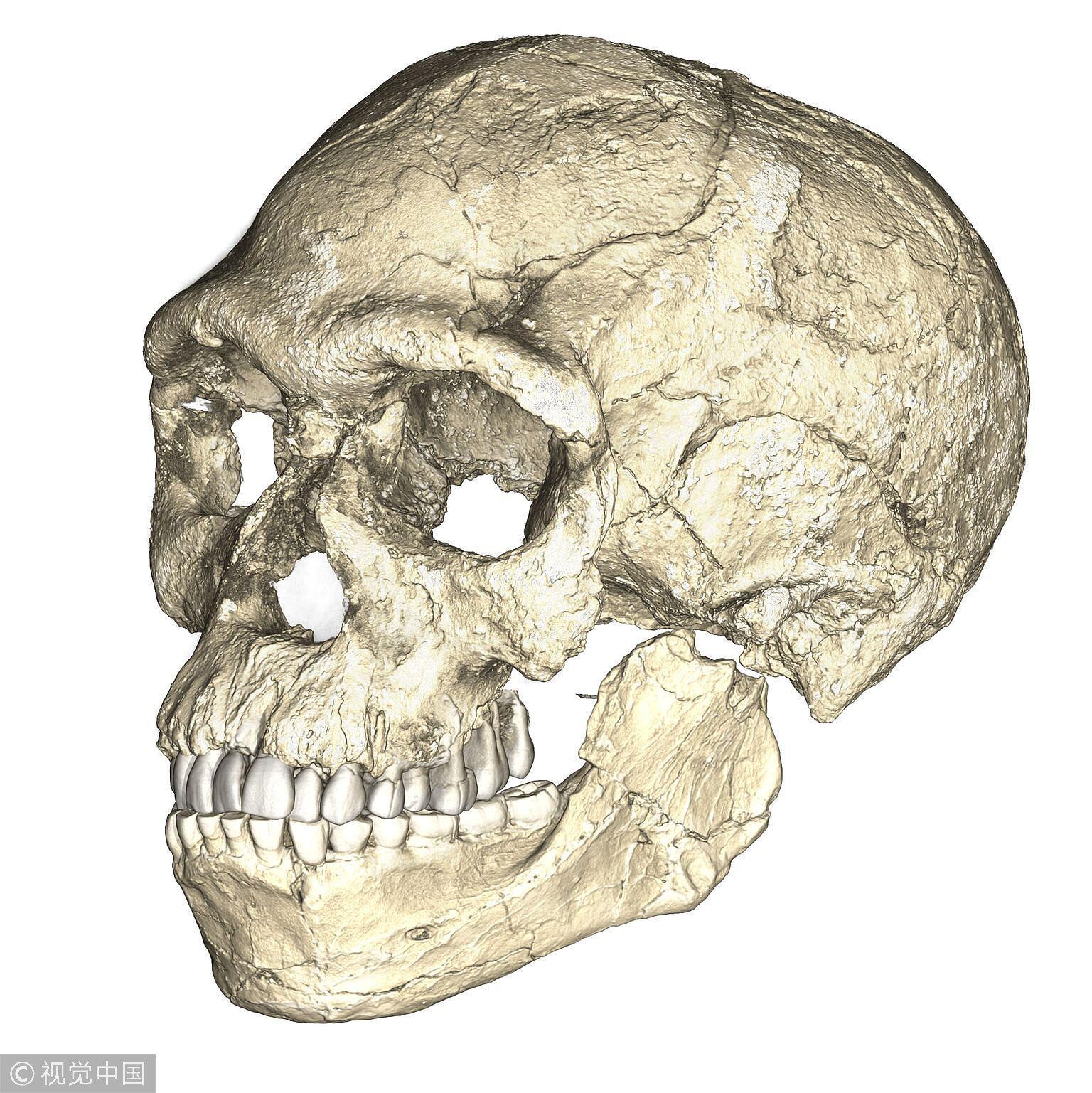 2017年6月发现的最早的智人化石,显示出智人的大脑形状和功能都在随着进化历程改变 / 视觉中国