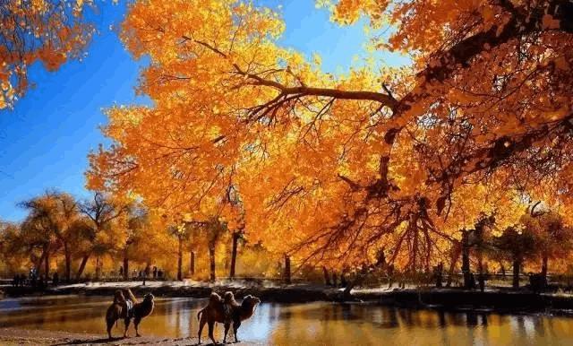 新疆四大胡杨林观赏地 你都去过吗?