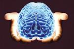 科学家将部分人脑组织植入鼠脑 结果如何?