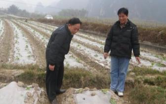 珠海市领导检查指导农业防寒抗冻工作