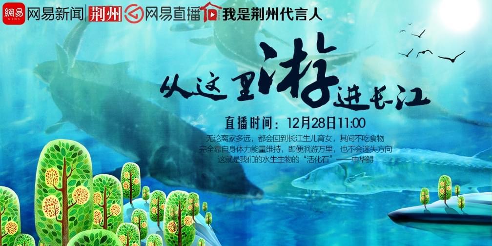 """中华鲟从这里""""游""""进长江"""