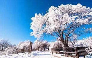 落雪的黛眉 洁白的冬韵如梦