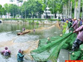 华工西湖里捞近万斤鱼 评论:北湖的鸭子瑟瑟发抖