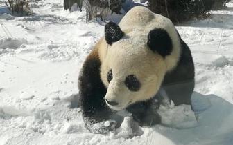 大雪过后辽宁人都冻懵了 滚滚却更开心了