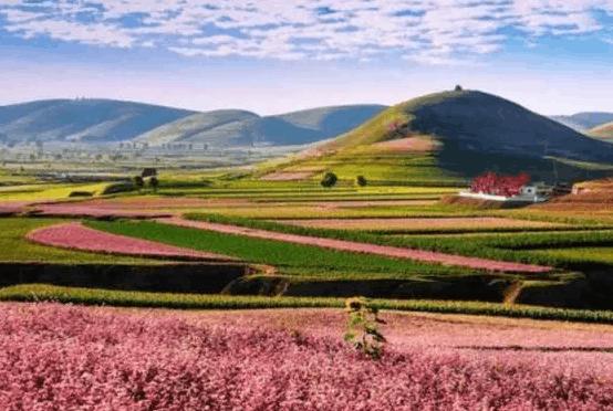 黄土朝天的陕北小县城 竟然一次性长出55万亩花海!